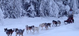 Mushing Photos Winter 2014